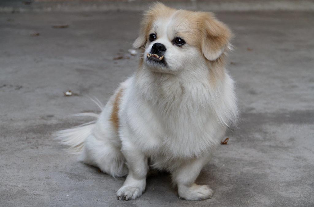 Dog Bite Safety Tips