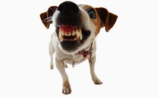 Top 13 Dangerous Dogs